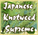 Japanese Knotweed Supreme